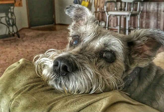 Justiça do DF condena tutores de cães que mataram cachorro de estimação