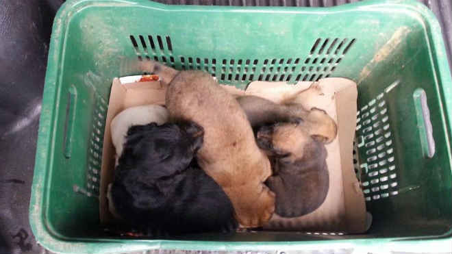 Filhotes de cães são resgatados em 'operação especial' no ES. Veja o vídeo!
