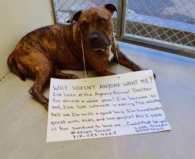 Depressivo, cão para de comer por não ter uma família