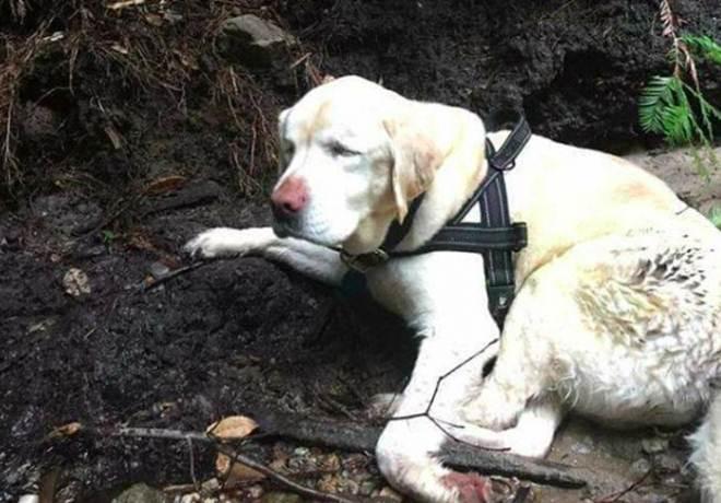 Cadela cega e idosa é encontrada viva nas montanhas uma semana após desaparecer