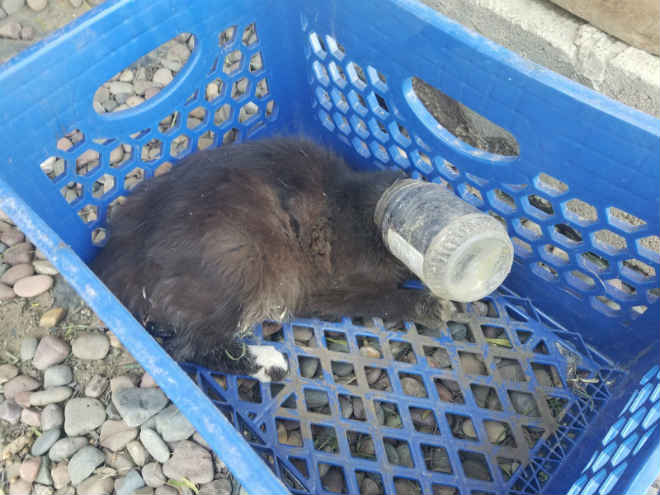 Gato é salvo após ficar com cabeça entalada em jarro de manteiga de amendoim