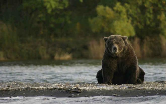 Ursos adestrados são explorados em turnê ridícula – Assine a petição para que isso pare de acontecer