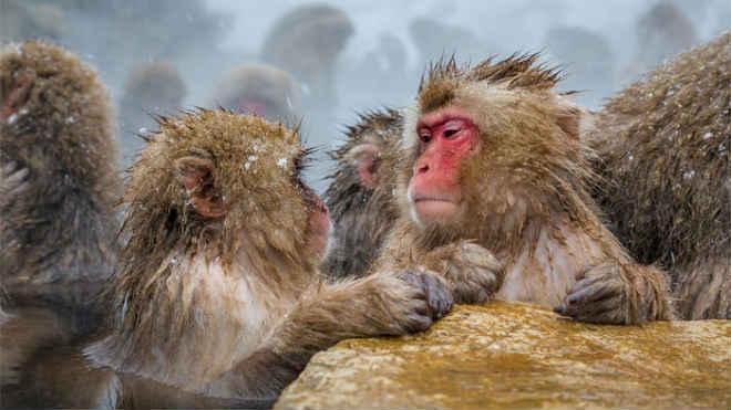 Petição pede aos EUA para considerar declarar 300 primatas do Centro de Pesquisas de Oregon como ameaçados