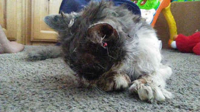 Gato morre após ser agredido e torturado com cola quente nos EUA