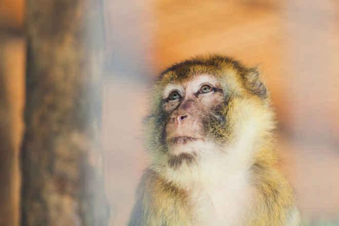Petição: Fechem o laboratório da Universidade de Washington por maus-tratos a animais