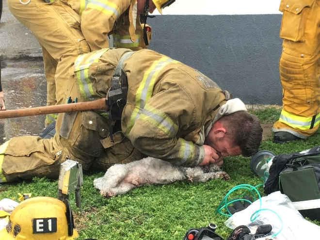Bombeiro faz respiração boca-a-boca para salvar cão após incêndio nos EUA