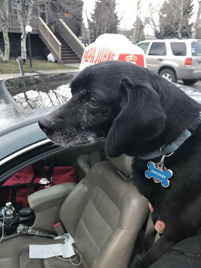 Rapaz atrasa entrega de pizza e arrisca emprego para resgatar cão perdido