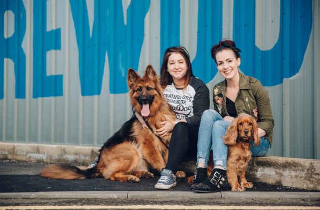 Cervejaria dá licença paga de 1 semana para 'pais e mães de cachorro' resgatados