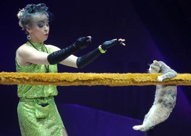 Gatos equilibristas no circo, espetáculo ou maus-tratos animal?
