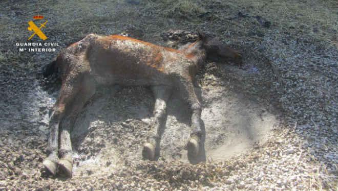 Espanha: duas pessoas são investigadas por maus-tratos depois de encontrarem égua morta e cavalos desnutridos