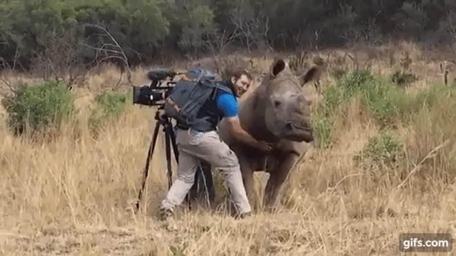Este rinoceronte deixou um fotógrafo fazer carinho em sua barriga no meio da selva