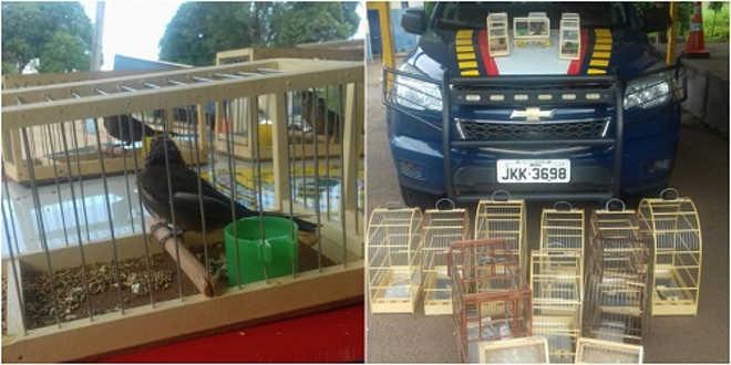PRF e Ibama apreendem animais transportados ilegalmente na BR 153