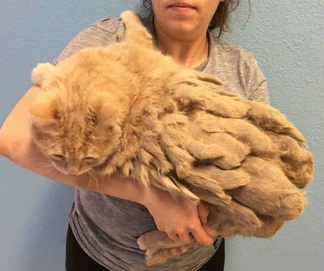 Gato abandonado é resgatado após verem o estado do seu pelo