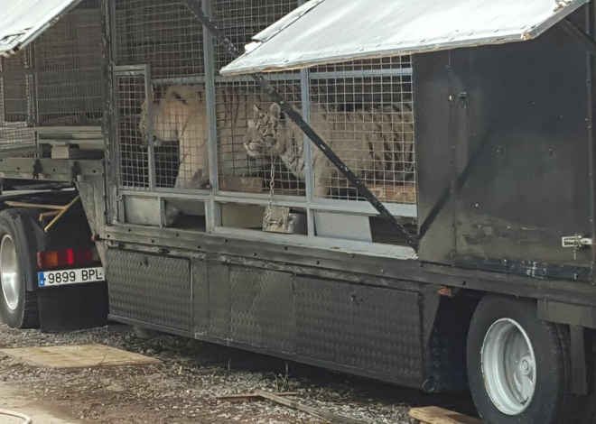 Gáldar, nas Ilhas Canárias, proíbe circos com animais desde 2010