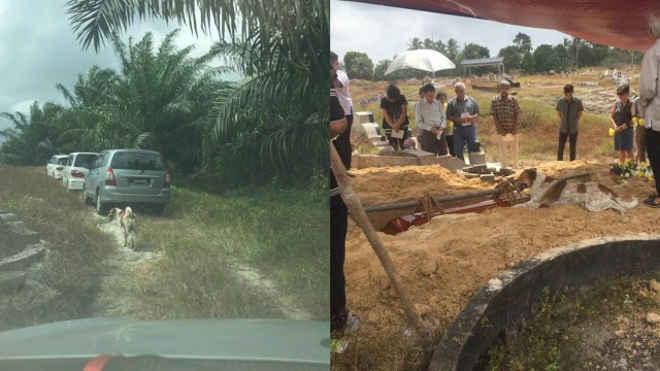 Cachorro corre por 3 km para ir ao enterro da tutora na Malásia e fica ao lado da sepultura
