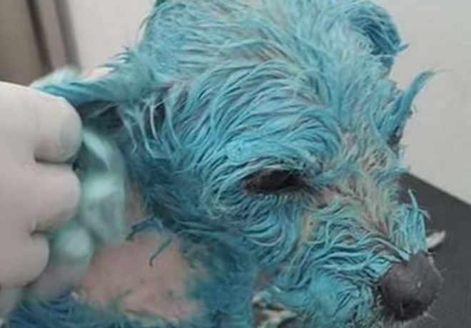 Comoção no caso de cadela que morreu após ser torturada e pintada de azul no México