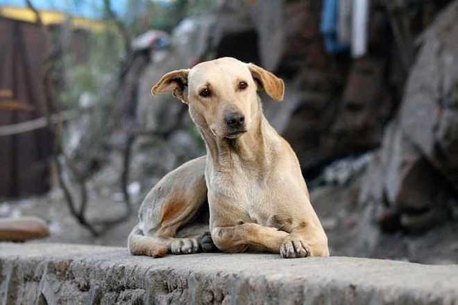 Zoonoses de Belo Horizonte (MG) faz apelo pela adoção de animais
