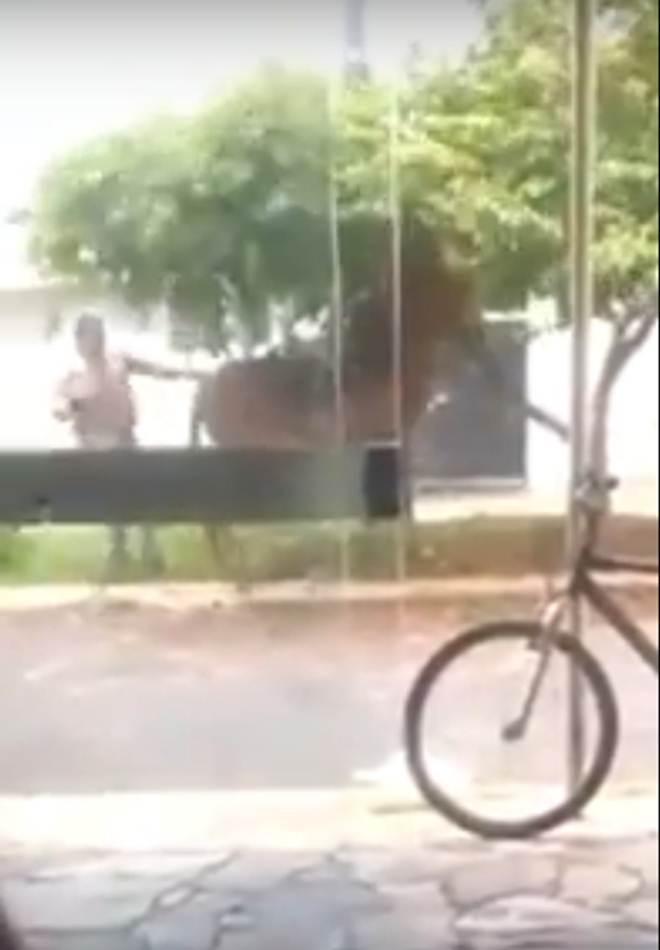 Homem é flagrado agredindo uma mula com chicotadas em Frutal, MG