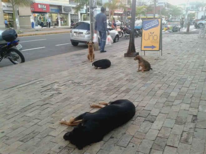 Audiência pública discutirá soluções para os animais de rua em Itabira, MG
