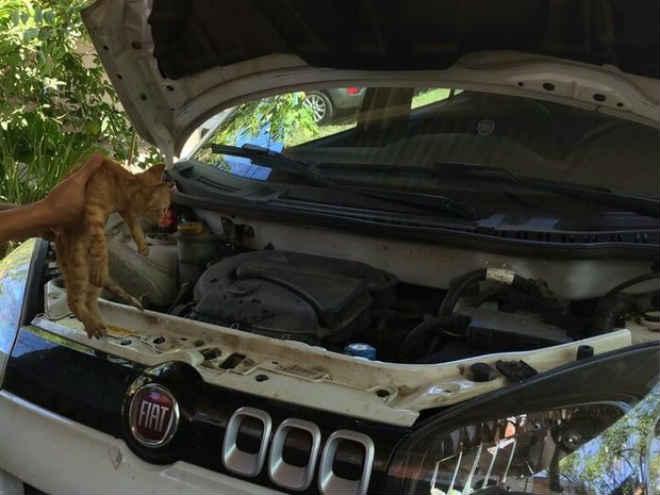 Gato fica preso em motor de carro e é adotado pelos donos do veículo