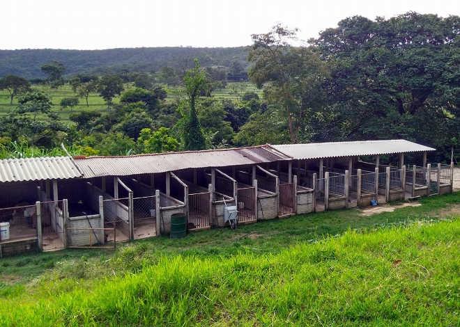 Associação protetora dos animais 'Apap' corre risco de fechar em Paracatu, MG