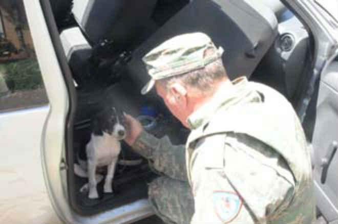 PM salva cão que ficou trancado em carro por 1h em Uberaba, MG