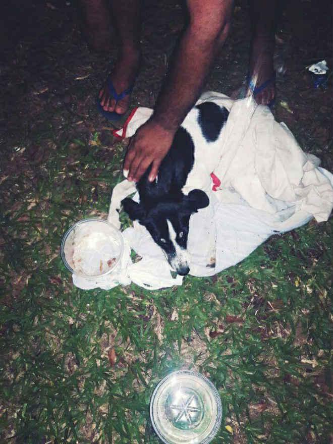 Cadela é estuprada no bairro Mansour e precisa de ajuda em Uberlândia, MG