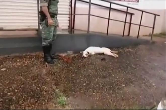 Cão é encontrado morto e amarrado em Uberlândia, MG