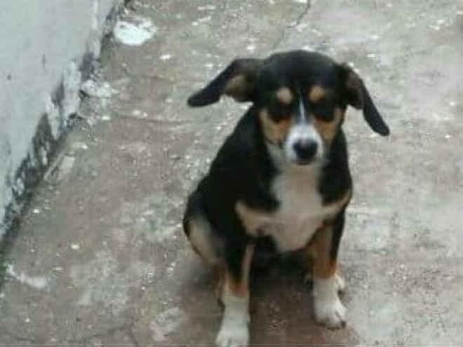 Veja os animais que estão para adoção em Uberlândia, MG