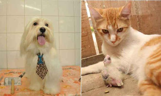 Assembleia de Minas vota projeto para monitorar pets online