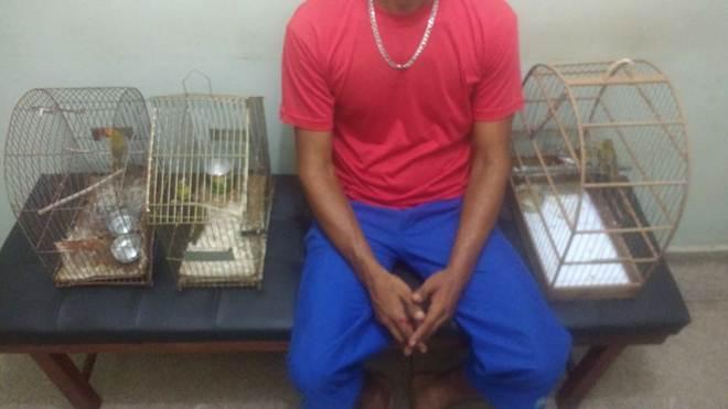 Homem é multado em R$ 3 mil  por manter aves em cativeiro em Aparecida do Taboado, MS