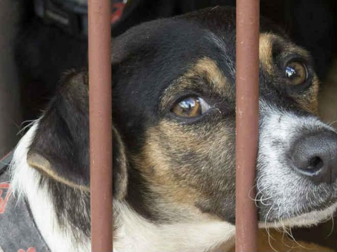 Festa arrecada R$ 5,9 mil para ONG que cuida de cães em Campo Grande, MS