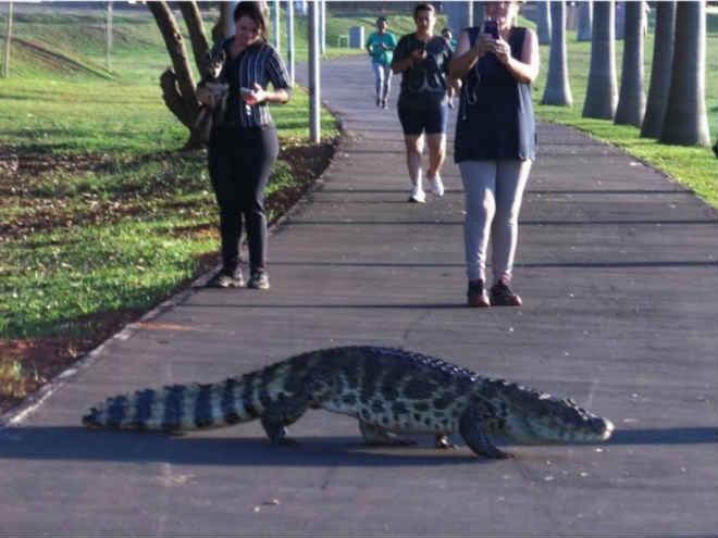 Secretário de Meio Ambiente discute possível retirada de animais da Lagoa Maior, em Três Lagoas, MS