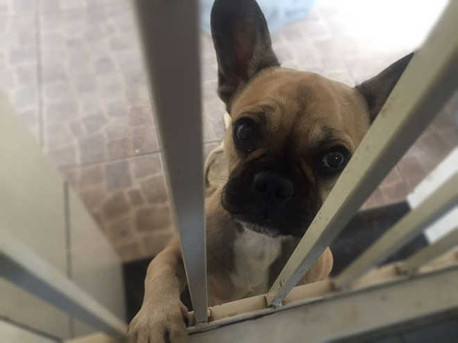 Vetada colocação de microchips em todos os cães de Mato Grosso do Sul