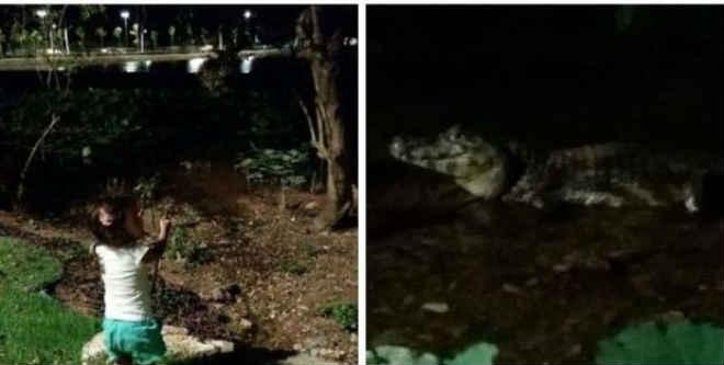 Frequentadores reclamam de jacarés no Parque das Águas e zoólogo recomenda instalação de placas com aviso