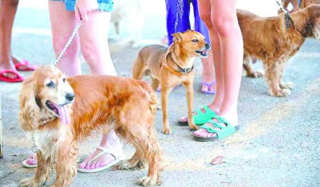 Projeto prevê chip para cães e gatos em Rondonópolis , MT