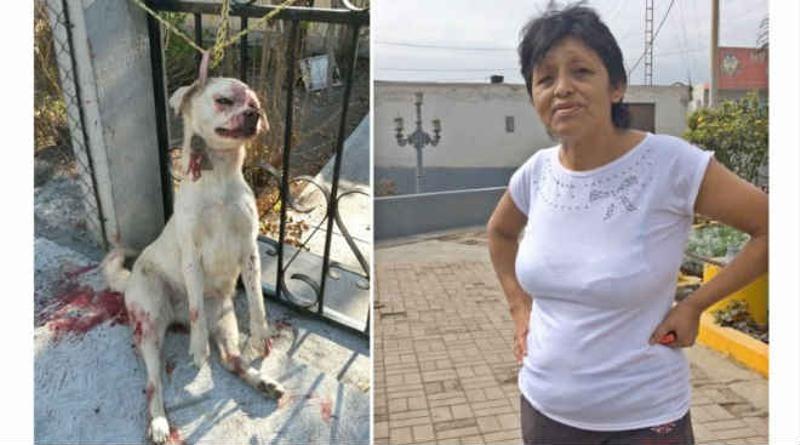 Mulher espanca cãozinho por achar ele feio