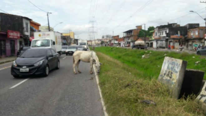 Cavalo machucado e amarrado em torre de alta tensão é resgatado em Belém, PA