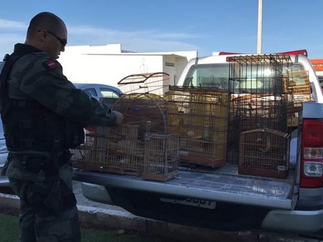 Após receber trote, Polícia encontra animais silvestres no litoral da PB