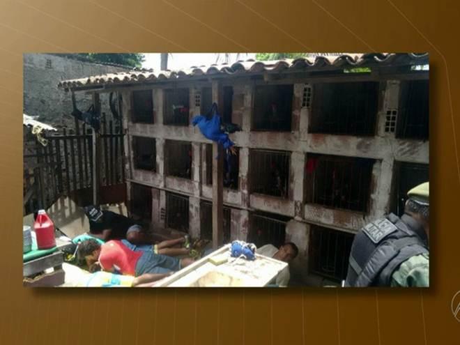 Polícia detém nove e desarticula rinha de galo em Santa Rita, na Paraíba