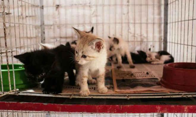 Cães e gatos podem ser adotados na Gerência de Proteção Animal em Caruaru, PE