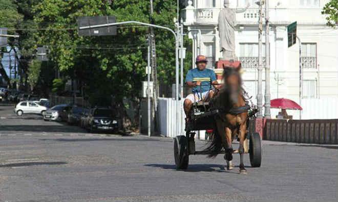 Câmara do Recife (PE) vai discutir a regulamentação da Lei de Tração Animal