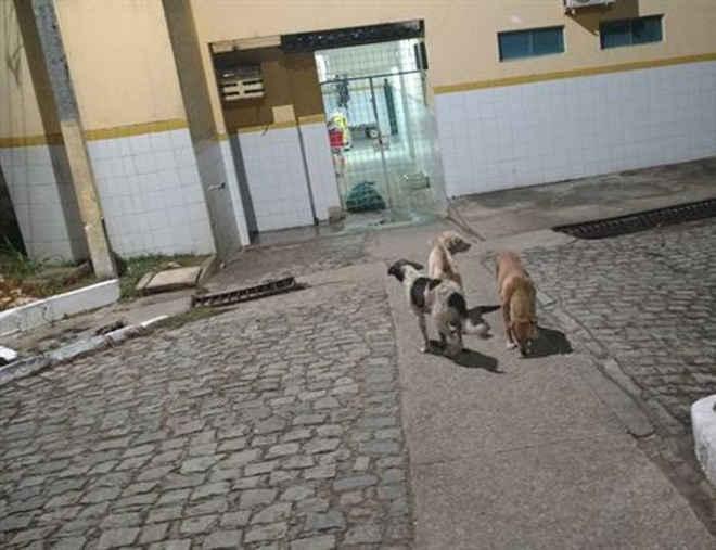 Cachorros esperam há meses por mulher que faleceu em hospital em PE