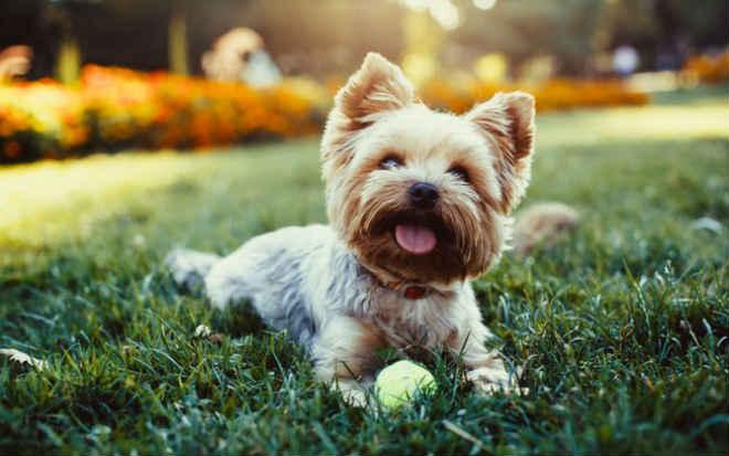 Dia Nacional dos Animais tem ação contra maus-tratos em Teresina, PI
