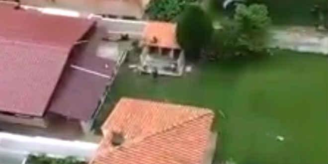 Vídeo de suposta agressão a cães em pet shop de Curitiba (PR) causa polêmica