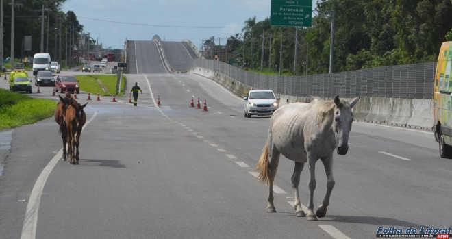 Projeto de Lei visa identificar todos os cavalos em Paranaguá, PR