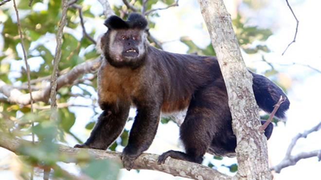 Saúde lança alerta sobre violência contra macacos no Paraná