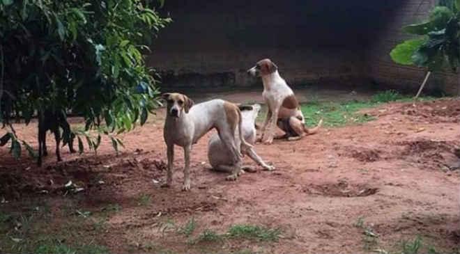 Cães de caça são sequestrados de abrigo para animais em Umuarama, PR