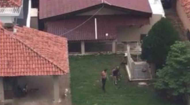 Denúncia de maus-tratos animais por donos de petshop em Curitiba (PR) viraliza nas redes sociais