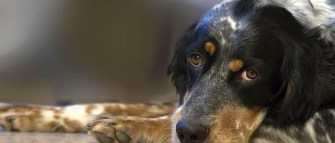 Portugal: Suspeito de agredir cães abandonados em Aveiro nega acusações